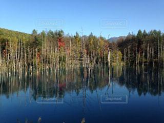 木々 に囲まれた水の体の写真・画像素材[1005413]