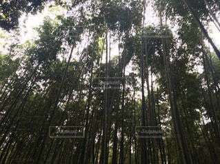 嵐山の竹林 - No.1005714