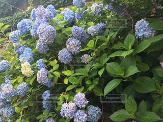 庭園の緑の植物の写真・画像素材[1689148]