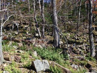 森の中の木の写真・画像素材[1732959]