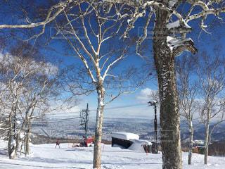 雪に覆われた木の写真・画像素材[1781969]