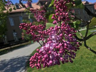 植物の上のピンクの花の写真・画像素材[2109748]