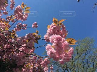 植物の上のピンクの花の写真・画像素材[2109768]