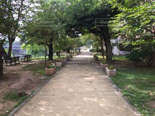 朝の並木道の写真・画像素材[1005754]