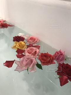 バラ風呂の写真・画像素材[1005758]