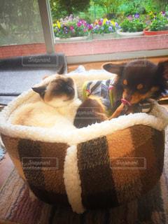 犬の隣に座っている猫の写真・画像素材[1008370]