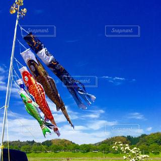空を泳ぐ鯉のぼりの写真・画像素材[1009890]