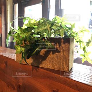 近くの植物のアップの写真・画像素材[1089216]