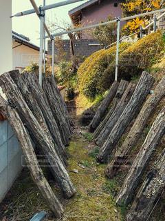 日がけで椎茸の成長を待つ原木たちの写真・画像素材[1095571]