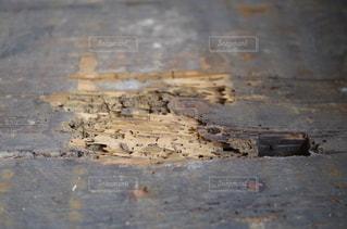 白アリに食べられた板の写真・画像素材[1247023]