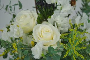 バラとミモザの写真・画像素材[1740075]