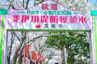 桜の名所100選 島根県雲南市木次町の写真・画像素材[2019098]