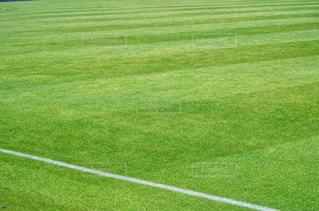 緑の芝生(スポーツ・イメージ)の写真・画像素材[2019185]