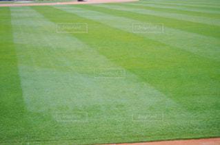 緑の芝生(スポーツ・イメージ)の写真・画像素材[2019193]