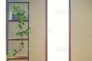 塗り壁と棚 観葉植物の写真・画像素材[2511270]