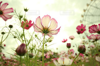 自然の美しさを感じる - No.1006084