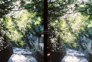 地面の雪の木の写真・画像素材[1006230]