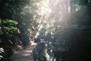 自然光の写真・画像素材[1007145]