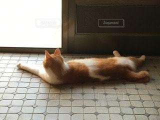 涼む猫の写真・画像素材[34265]