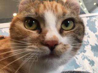 近くにカメラを見て猫のアップ - No.1006561