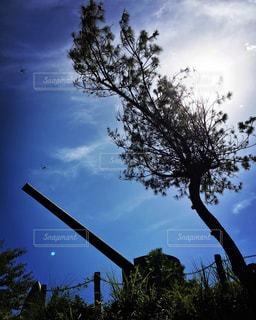 近くの木のアップの写真・画像素材[1007134]