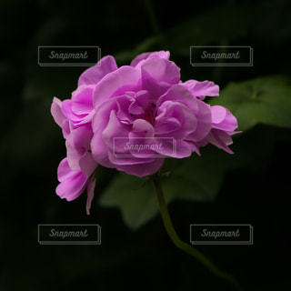 近くの花のアップの写真・画像素材[1009974]