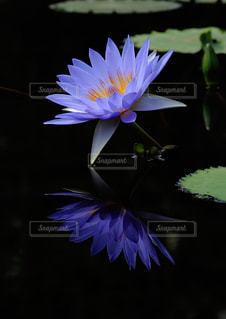 紫色の花の写真・画像素材[1036848]