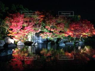 木々 に囲まれた水の体 - No.1007080