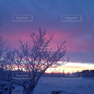 雪の中の夕日 - No.1008514