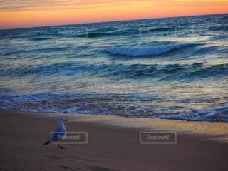 夕日を見つめるカモメ - No.1009653