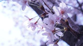 近くの花のアップの写真・画像素材[1090740]