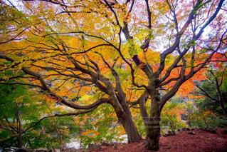 近くの木のアップの写真・画像素材[1636636]