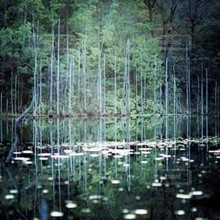木々 に囲まれた水の大きな体の写真・画像素材[1713291]