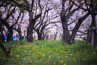春の写真・画像素材[2018971]