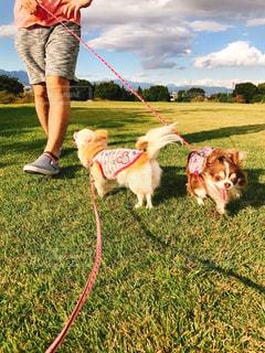 男とひもにつないで犬の写真・画像素材[1007656]
