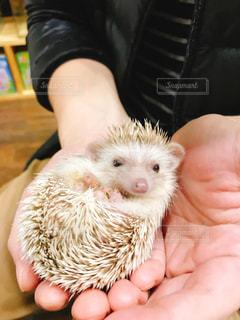 小動物を持っている手の写真・画像素材[1018664]