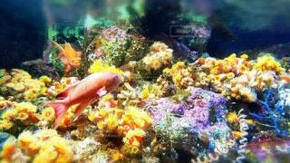 サンゴの水中ビューの写真・画像素材[1112179]