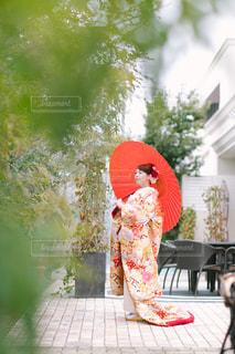 赤と白の花の写真・画像素材[1112452]