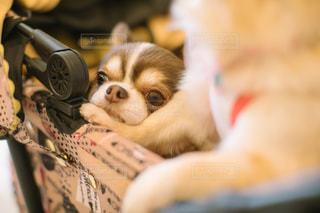近くに犬のアップの写真・画像素材[1112488]