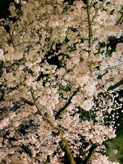 近くの植物のアップの写真・画像素材[1127717]
