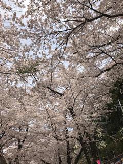 近くの木のアップの写真・画像素材[1127756]
