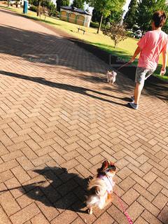 男とひもにつないで犬の写真・画像素材[1135560]