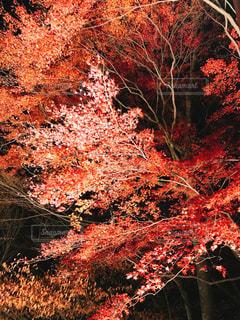 近くの木のアップの写真・画像素材[1135569]