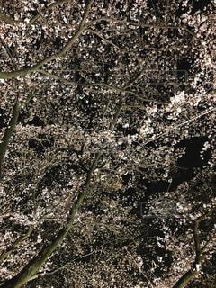 近くの木のアップの写真・画像素材[1135607]