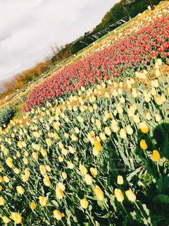 色とりどりの花のグループの写真・画像素材[1135789]