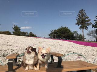ベンチに座っている犬の写真・画像素材[1135798]