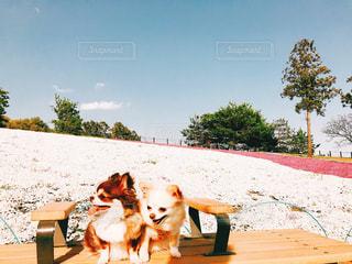 ベンチに座っている犬の写真・画像素材[1135826]