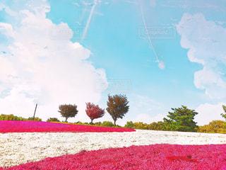 フィールドに赤い花の写真・画像素材[1135831]