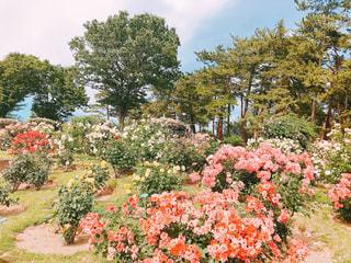 花園のクローズアップの写真・画像素材[2214551]