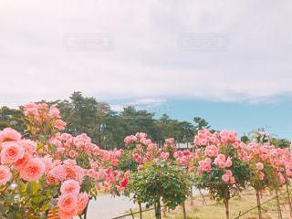 ピンクの花でいっぱいの花瓶の写真・画像素材[2216608]